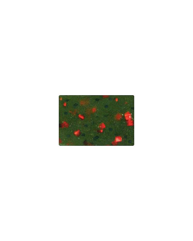"Силикон Reins Rockvibe Shad 3"" 025 watermelon red"