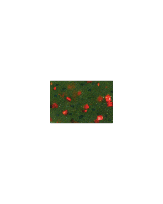 "Силикон Reins Rockvibe Shad 4"" 025 watermelon red"
