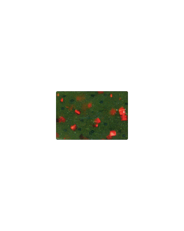 "Силикон Reins G-Tail Grub 3""(12)025 watermelon red"